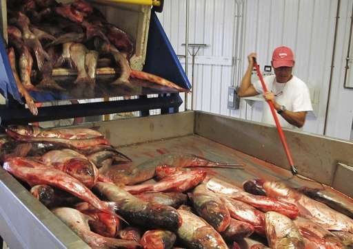 Michigan to offer prize in fight against invasive Asian carp