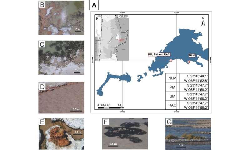 Microbial ecosystem at Laguna La Brava may contain novel microorganisms