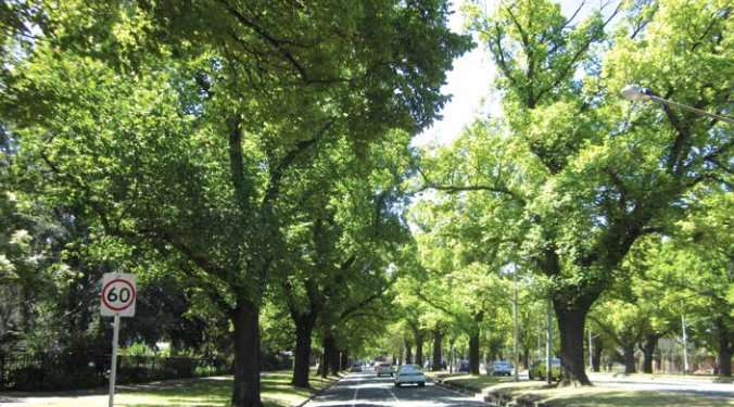 Millions of city trees at risk from rising temperatures