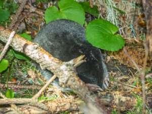 Backyard Scientist mole study shows anyone can be backyard scientist