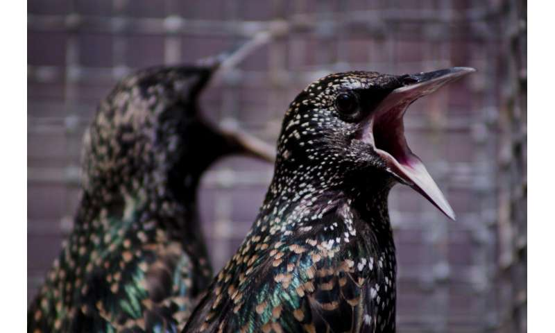 Molting feathers may help birds deal with environmental contaminants