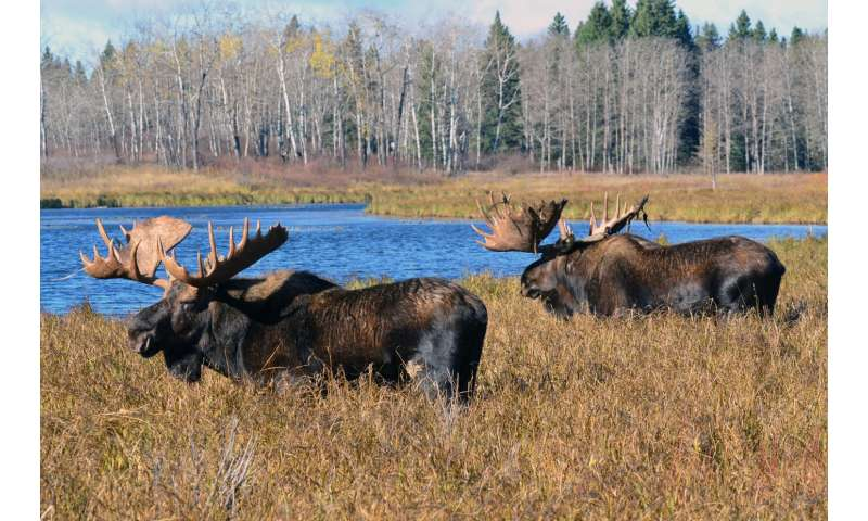 Moose tracking: There's an app for that.