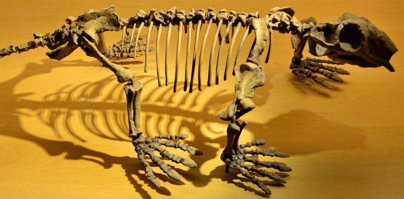 Il y a plus de 252 millions d'années, les ancêtres de mammifères sont devenus à sang chaud pour survivre à l'extinction massive