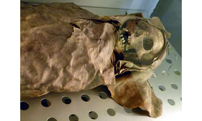 Mummies' tummies to reveal digestive evolution