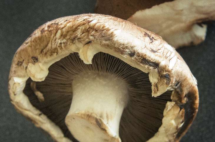 Mushrooms are full of antioxidants that may have antiaging potential