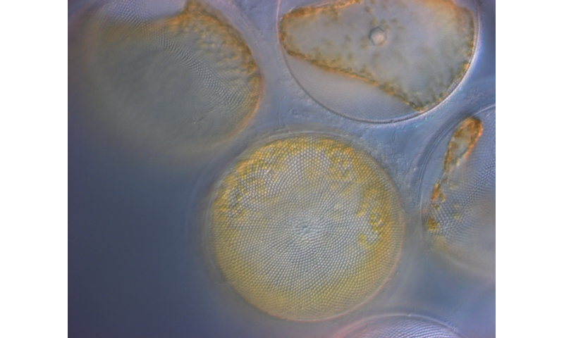 NASA taking stock of phytoplankton populations in the Pacific