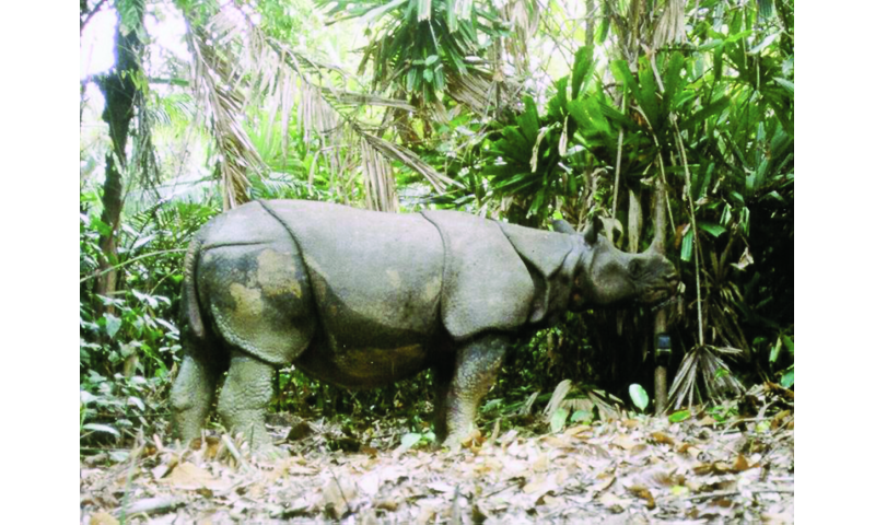 Natural disasters pose grave threat to planet's last Javan rhinos