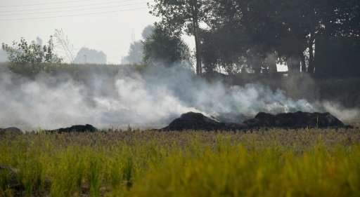 Nearly 35 million tonnes of post-harvest stubble is burnt annually in Haryana and Punjab, two predominantly rural states near De