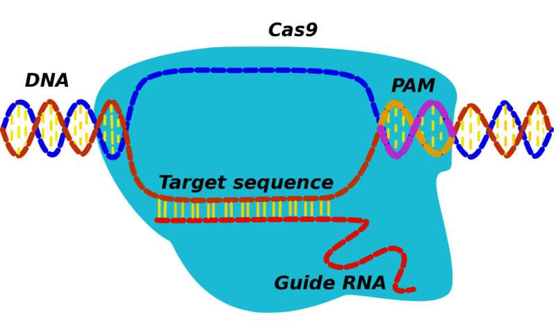 Need for speed makes genome editing efficient, if not better