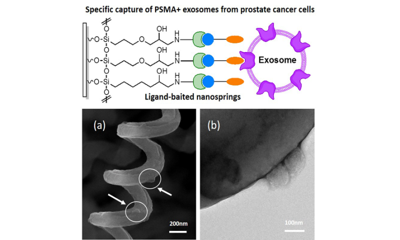 New approach for the capture of tumor-derived exosomes from a prostate cancer cell line
