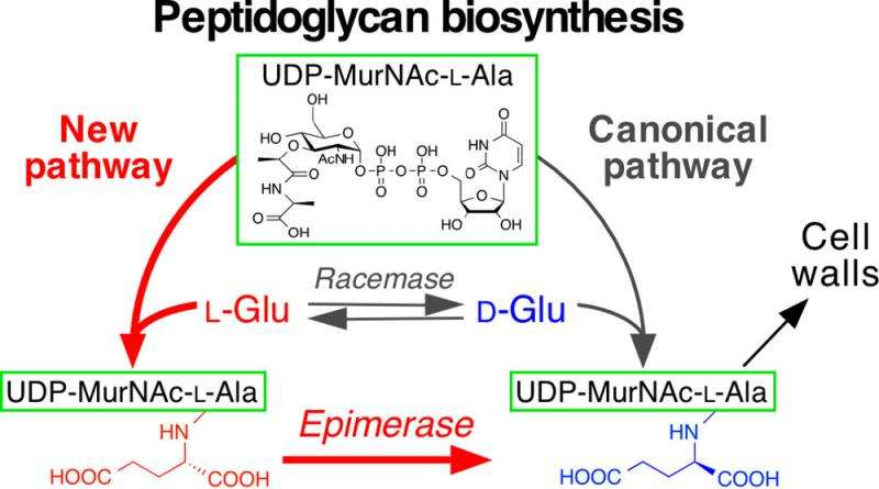 New biosynthetic pathway unique to pathogenic microorganisms