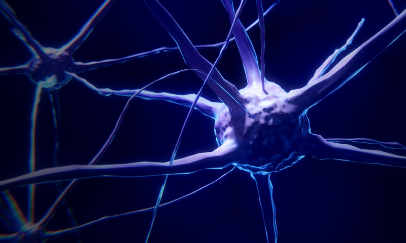 New brain research reveals that motor neurons adjust to control tasks