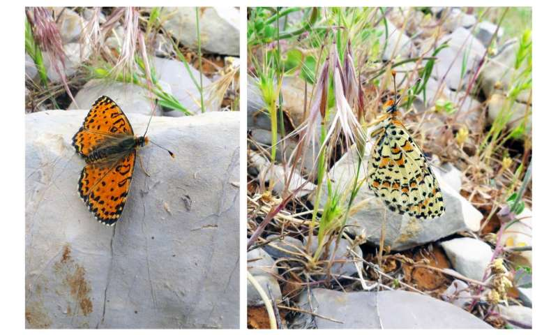 New butterfly species discovered in Israel for the first time in 109 years