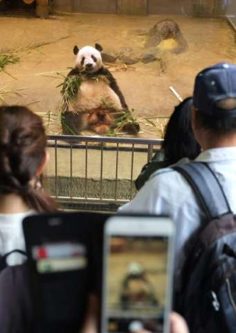 New dad Ri Ri is basking in the attention of visitors to Ueno Zoo, as panda fever sweeps Japan after the birth of a tiny cub on