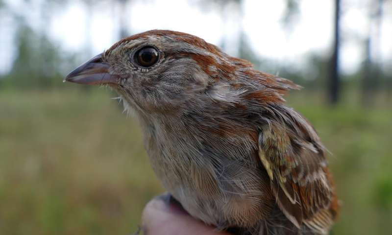 New details on nest preferences of declining sparrow