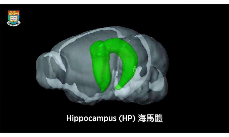 New functions of hippocampus unveiled to bring insights to causes and treatments of brain diseases