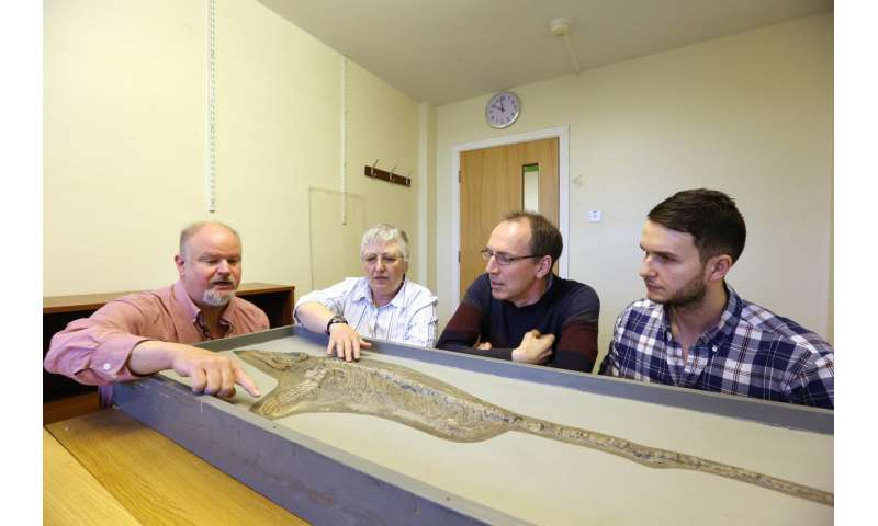 New ichthyosaur species, long gone, found in a storeroom