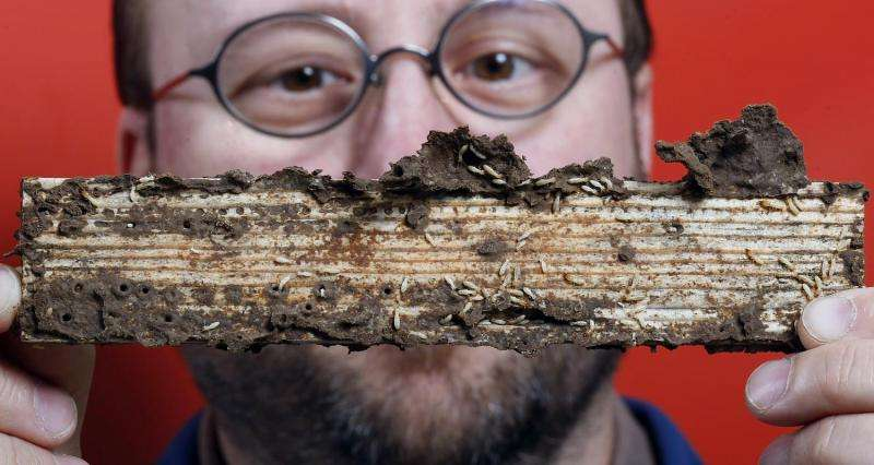 Newly developed insecticide and fungus combination could more effectively control, eliminate termites