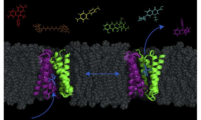 New model reveals possibility of pumping antibiotics into bacteria
