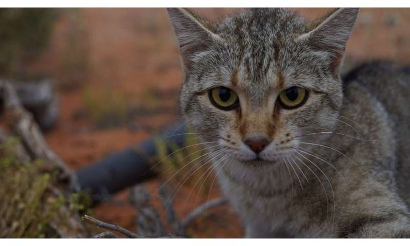 New research: Feral cats now cover over 99.8 percent of Australia