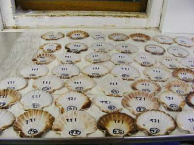 New study on how shellfish create their shells