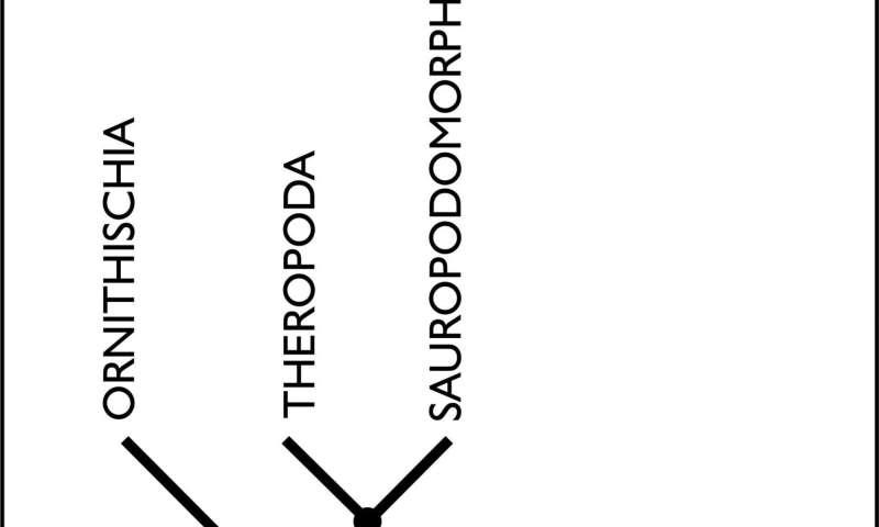 New study shakes the roots of the dinosaur family tree