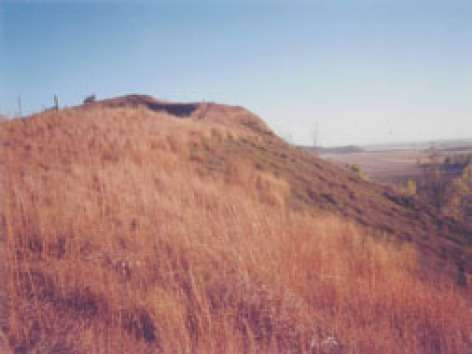 New study tracks nonnative plant species in timing of grassland green-up
