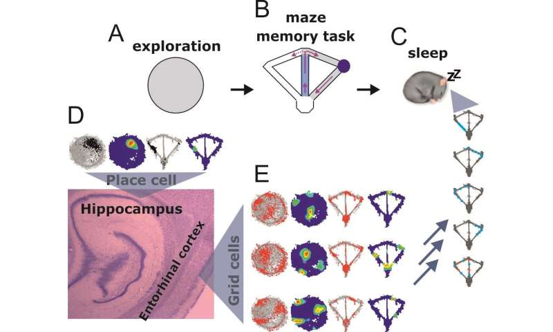 New system for forming memories