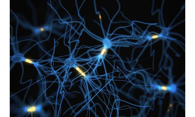 New tool offers snapshots of neuron activity