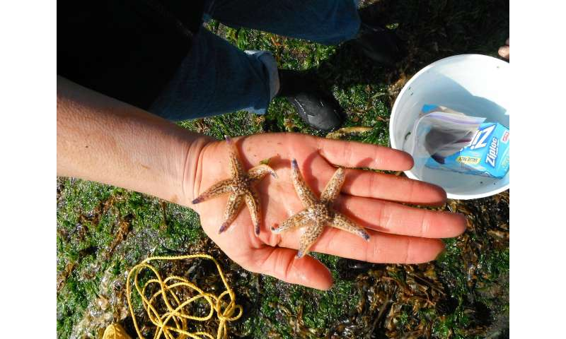 Non-native species from Japanese tsunami aided by unlikely partner: Plastics
