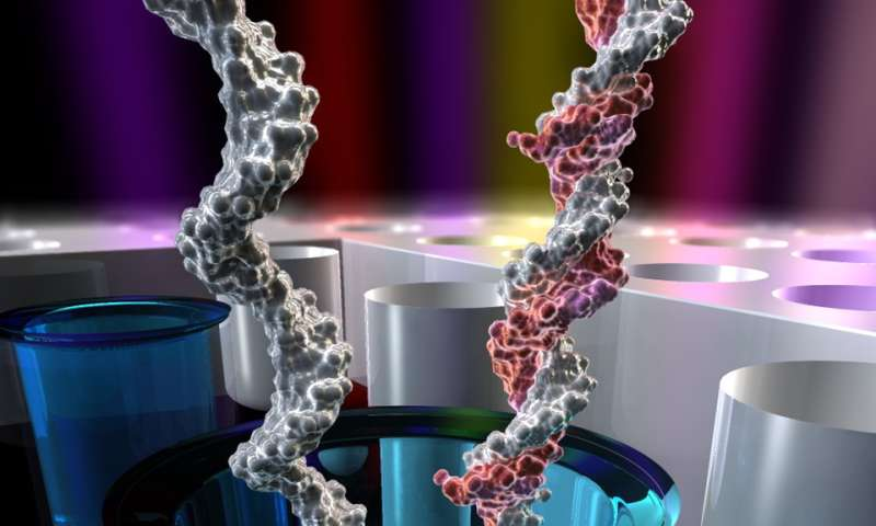 Northeastern biophysics study makes exciting advancements for the future of DNA sequencing