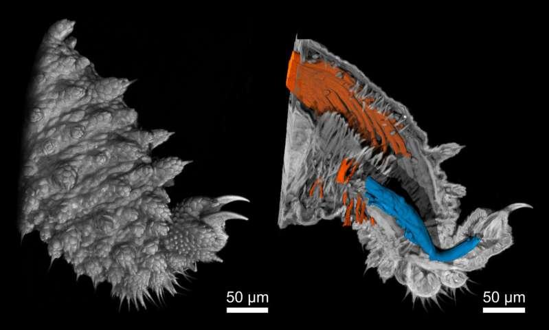 Novel Nano-CT device creates high-resolution 3D-X-rays of tiny velvet worm legs