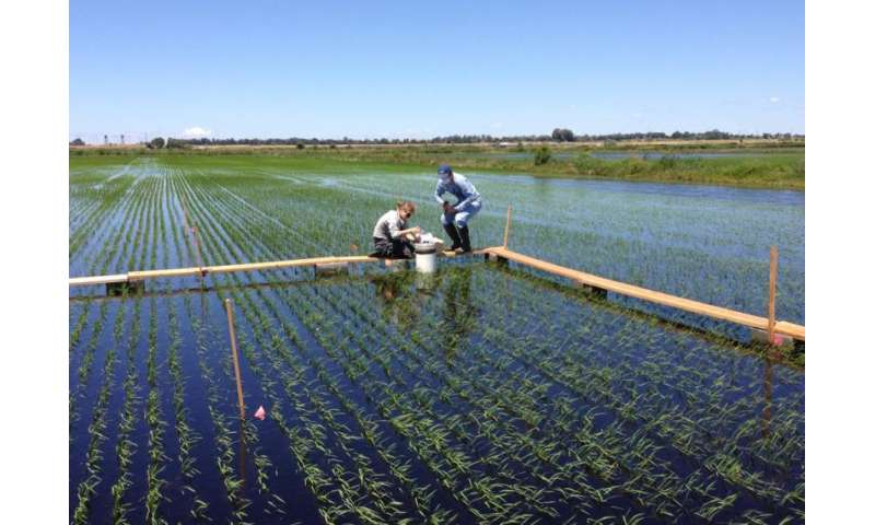 Nutrient availability in model wetlands helps regulate microbial metabolism and soil carbon cycling rates