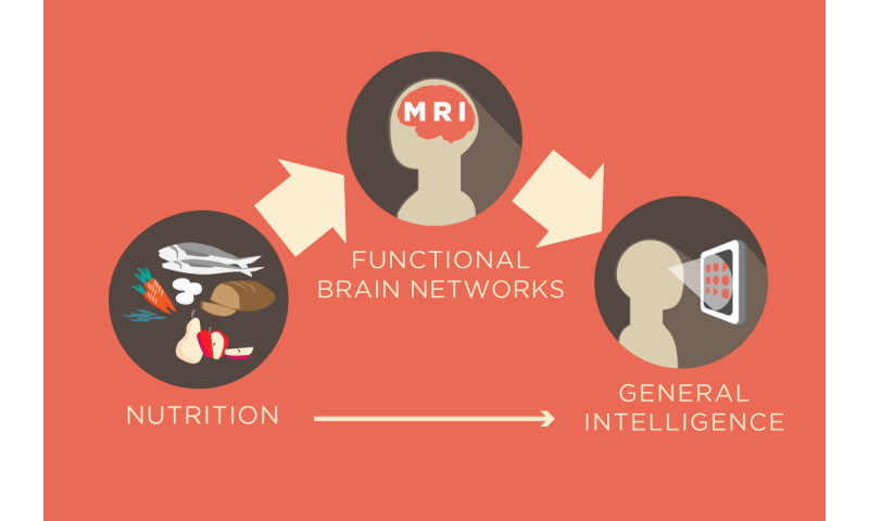 Nutrition has benefits for brain network organization, new research finds