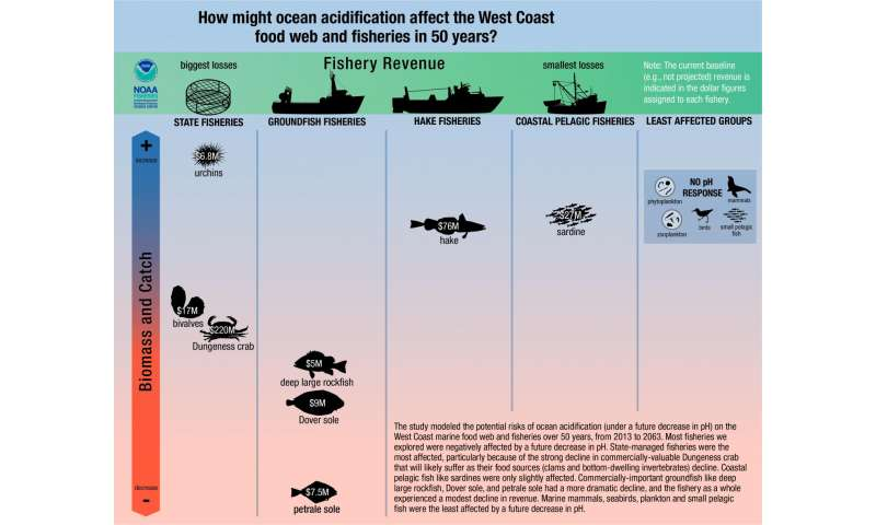 Ocean acidification to hit West Coast Dungeness crab fishery, new assessment shows