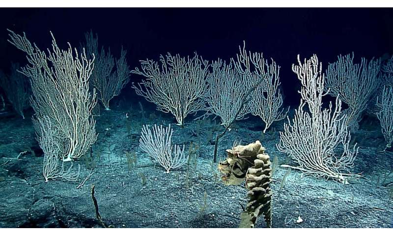 Panel to discuss deep-sea mining at AAAS Meeting