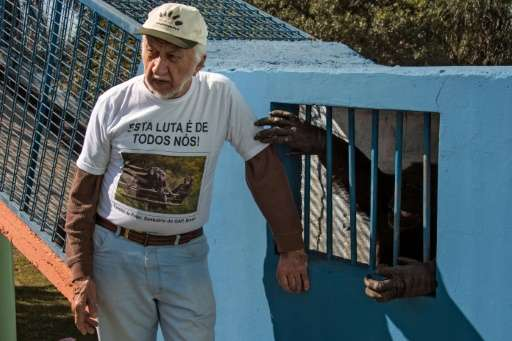 Pedro Ynterian, the director of the Great Apes Project (GAP), stands next to a chimpanzee at a sanctuary for apes in Sorocaba, s