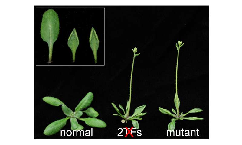 Penn biologists show how plants turn off genes they don't need