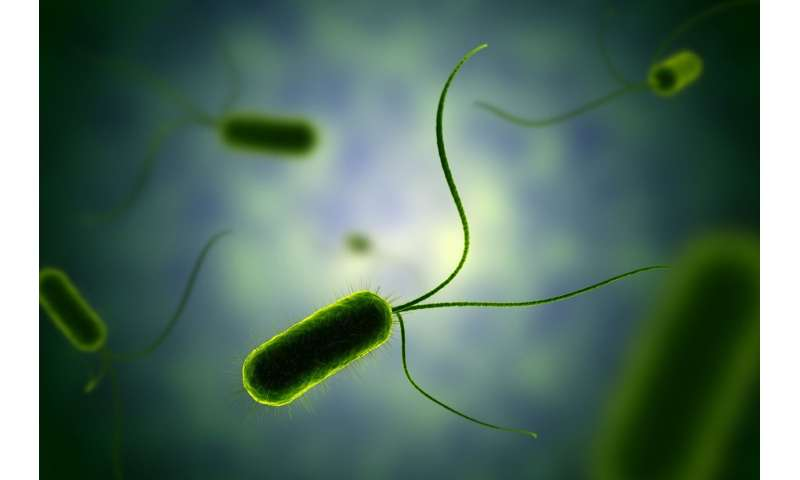 Personality and mood swings in bacteria