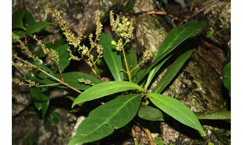Plant compound more powerful than AZT against HIV