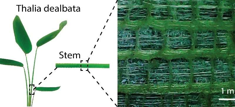 Plant Inspiration Could Lead To Flexible Electronics - composites Featured Graphene