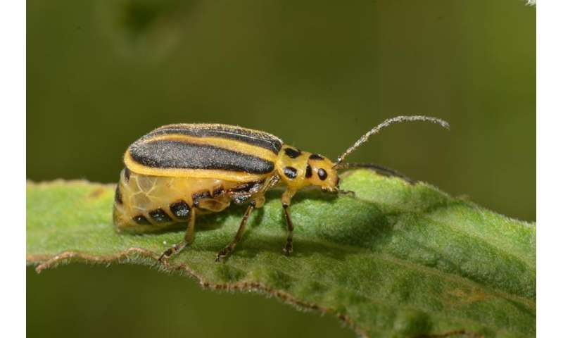 Plants' chemical messages keep pests moving