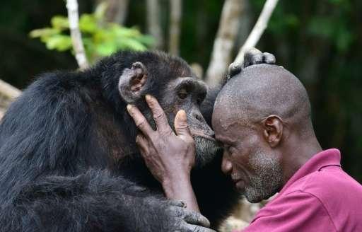 "Ponso's dedicated carer Germain Djenemaya Koidja says the ape is ""like my child"""