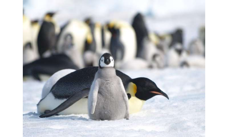 Poor outlook for Antarctic biodiversity