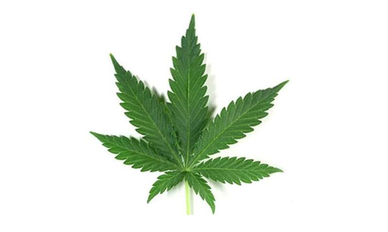 Pot may alter brain function of some with HIV