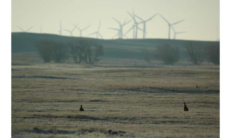 Prairie-chicken nests appear unaffected by wind energy facility