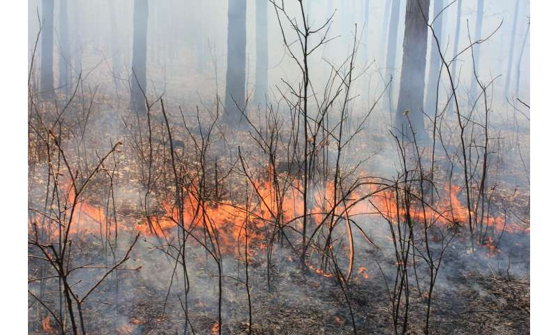 68-year study shows long-term effects of burning forests ...