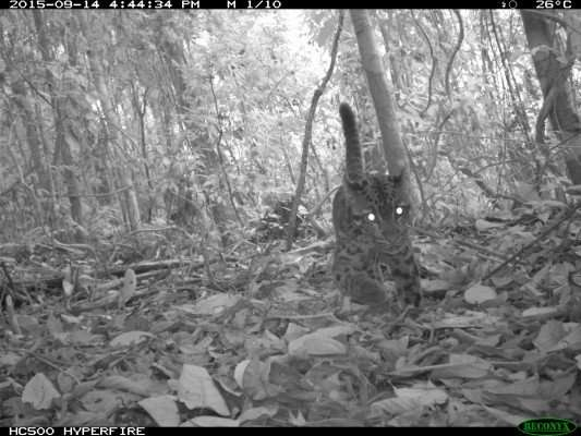 Protecting 'high carbon' rainforest also protects threatened wildlife