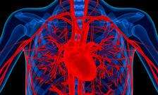 Protein may protect against heart attack