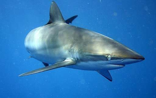 Proteins in shark teeth could hint at what they eat
